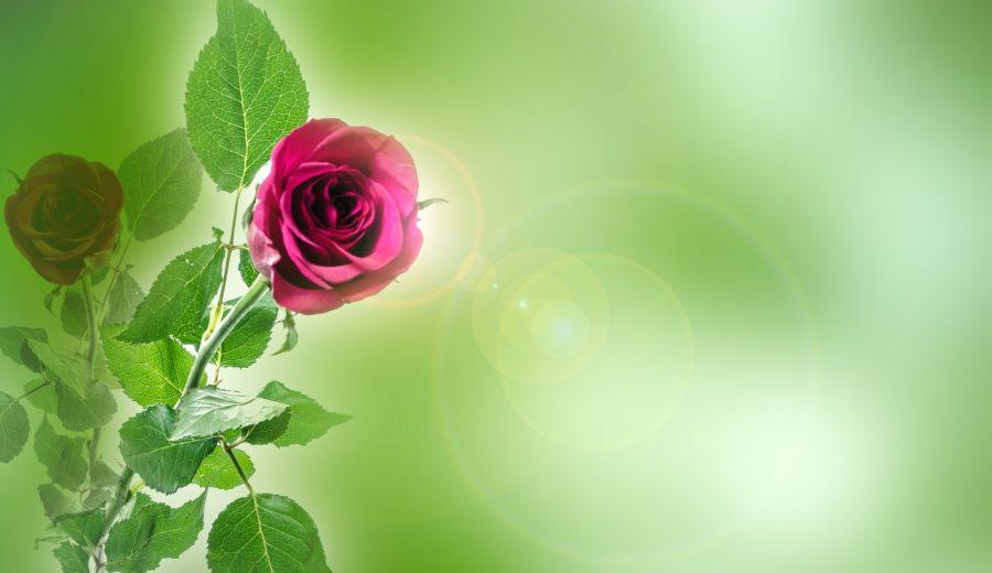 flower-315378